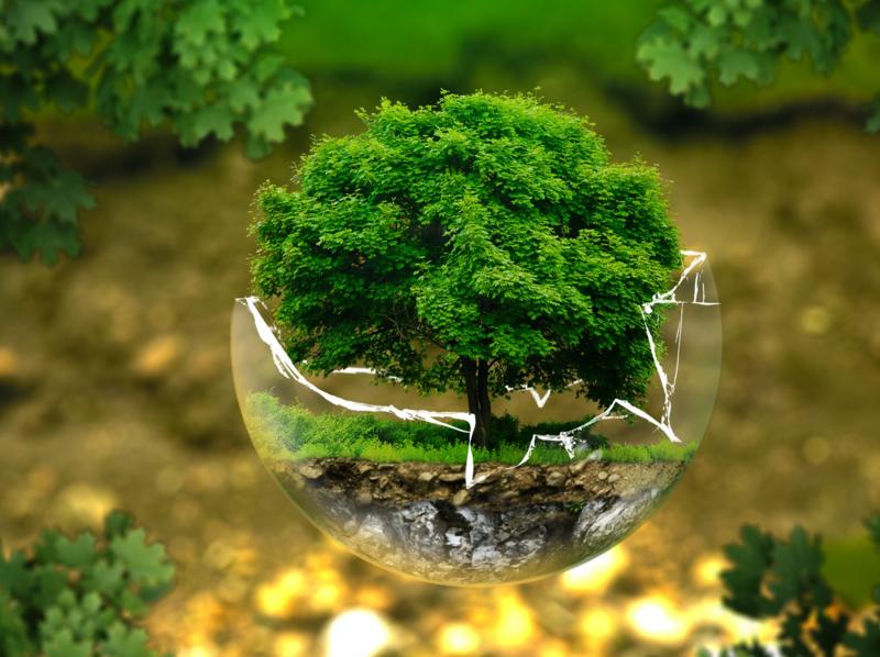 green+treer
