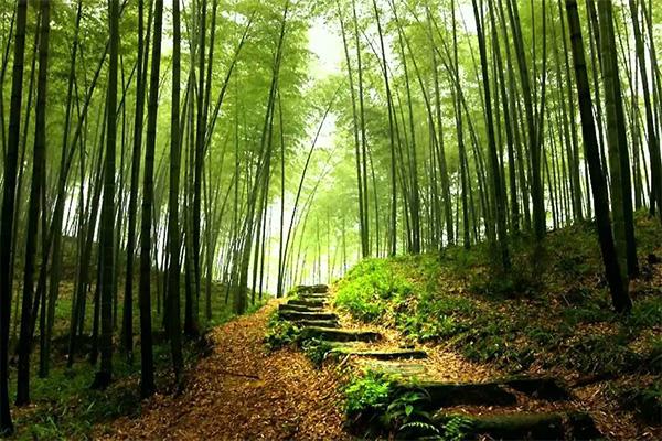 ป่าสวยงาม